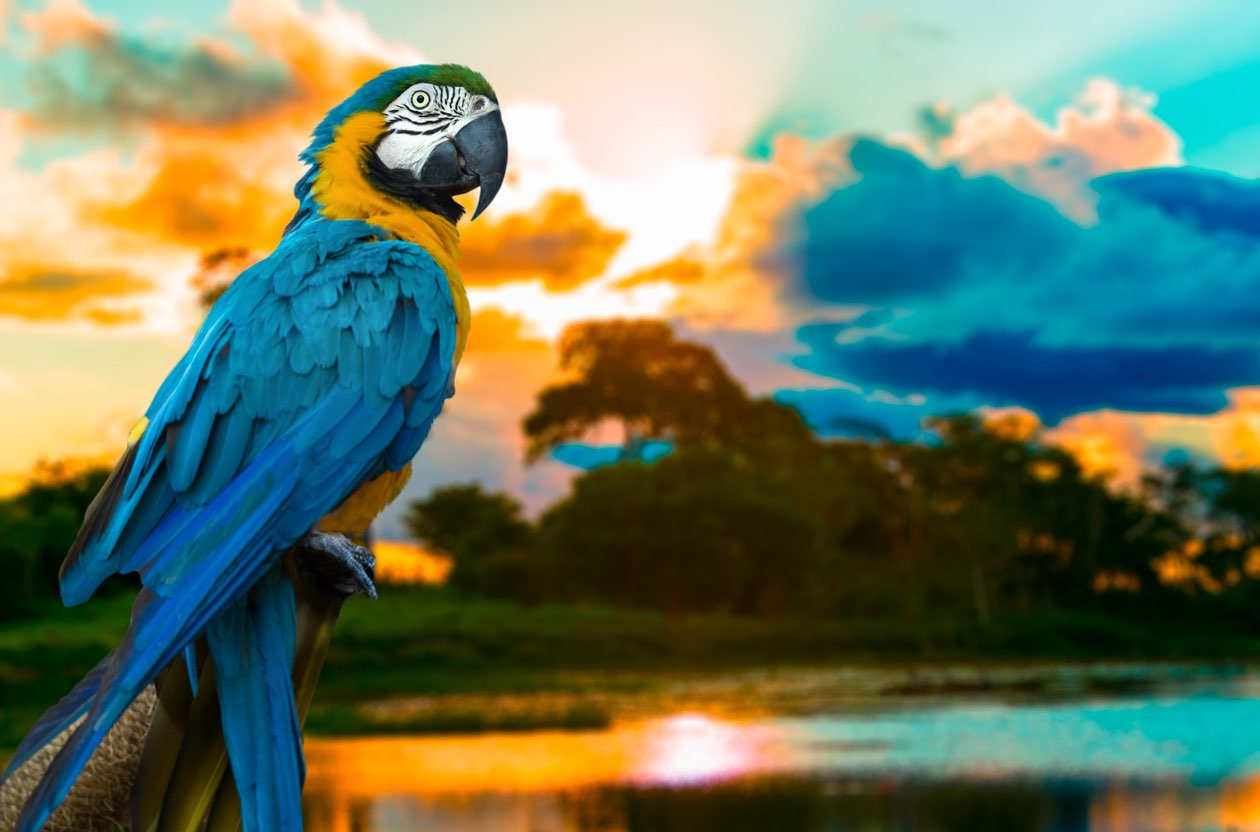 The Peruvian Amazon: Everything You Need to Know