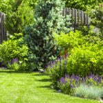 Texas Smartscape Class: Water Efficient Landscape Design, June 24
