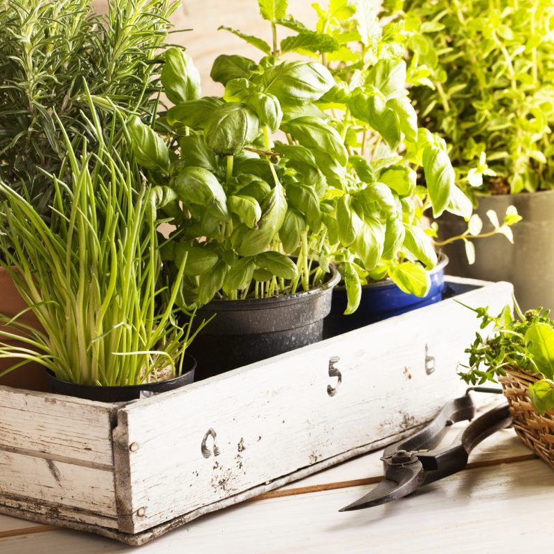 Plant an Herb Garden at Home!