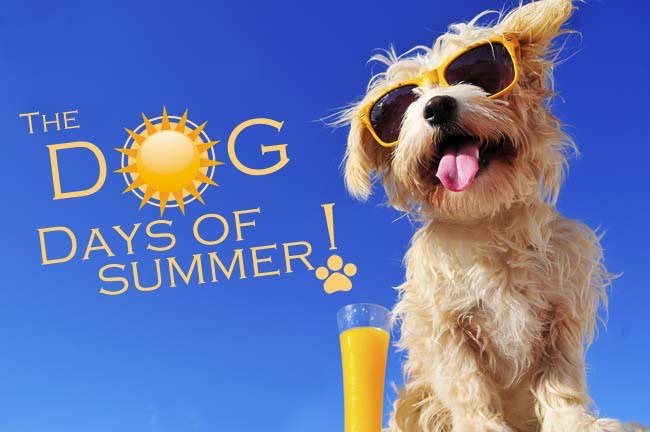 Vote Now in Our Dog Days of Summer Photo Contest!