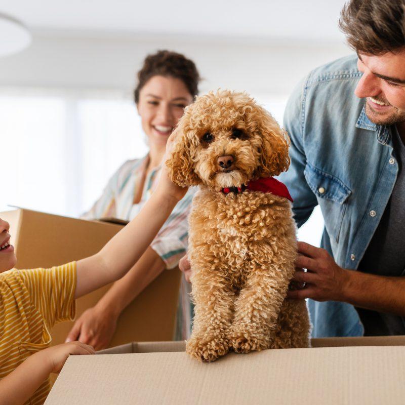Tips on Adopting a Dog