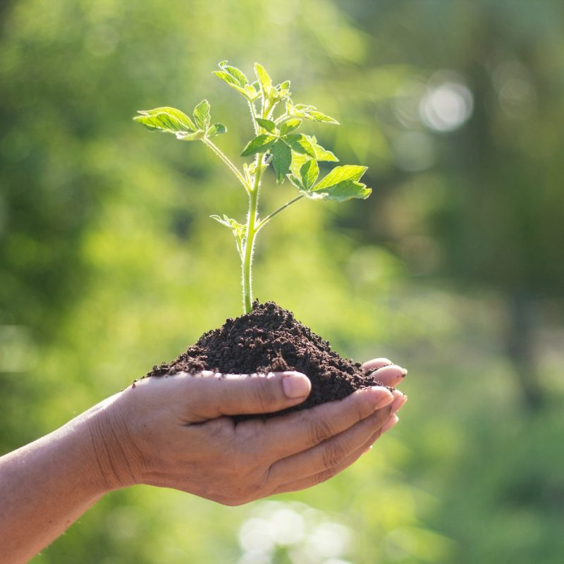 Hands holding young plants sprouting and growing on green nature background, Earth Day, new life growth ecology and business financial progress concept.