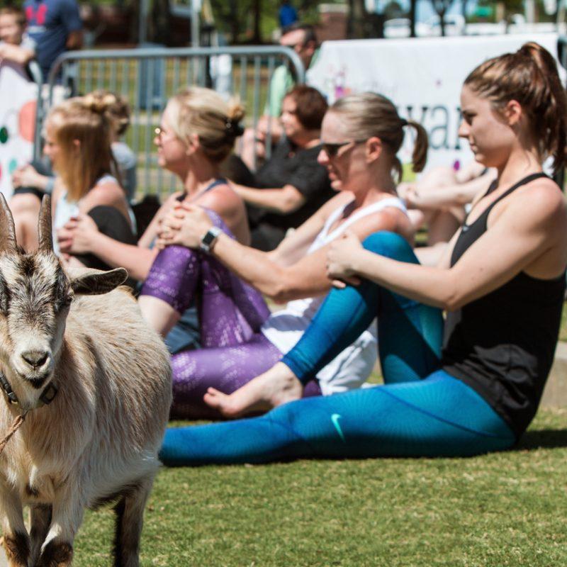 Goat Yoga Returns to Addison Circle