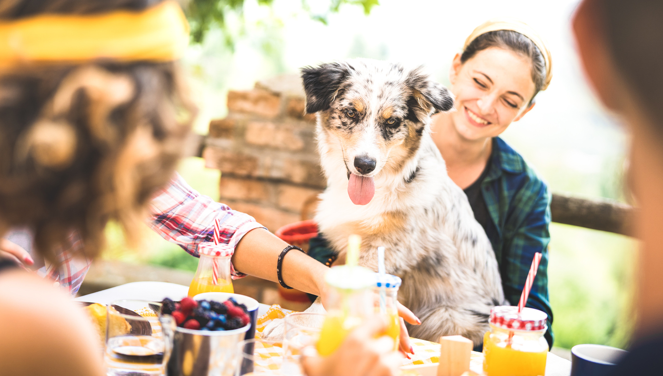 Restaurants You Can Take Your Dog To