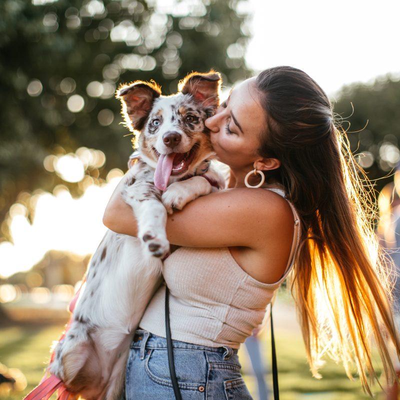 Pints & Pups at Addison Circle Park