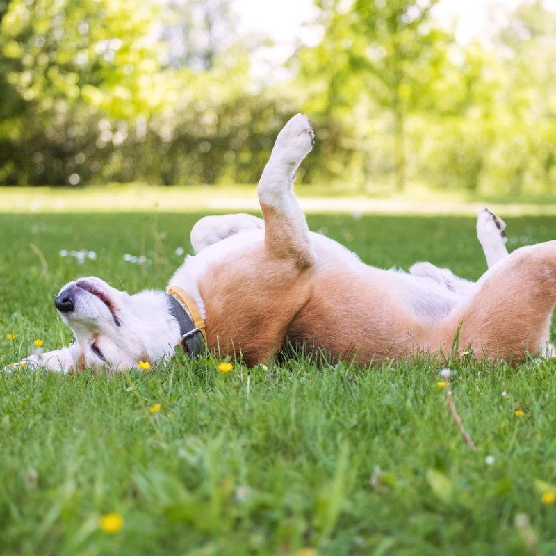 Keep Your Pets Cool in the Summer Heat