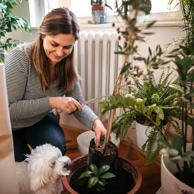 All About Pet-Friendly Plants and Landscaping